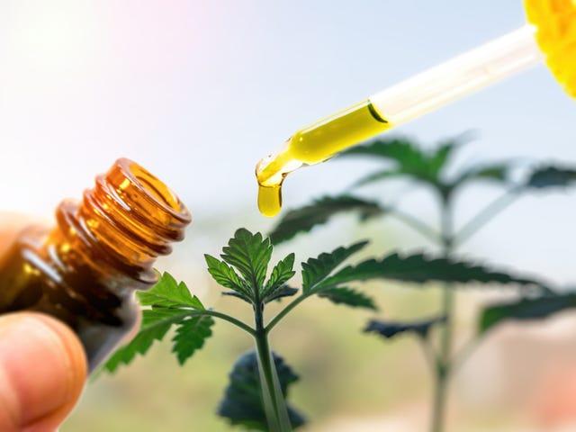 The Hemp Network And Medical Marijuana Controversy